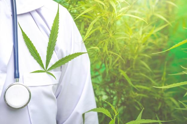 Marihuana medicinal, concepto de medicina herbal alternativa.