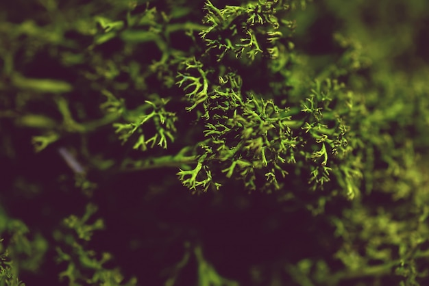 Marihuana medicinal. fondo verde abstracto