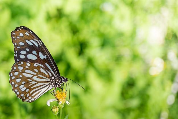 Mariposa alimentándose de flor natural