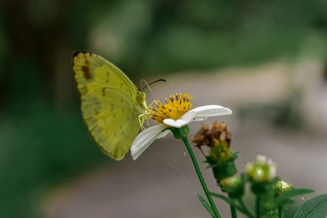Mariposa amarilla con flores