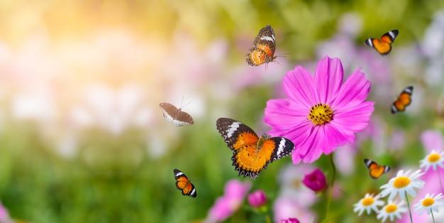 La mariposa de color amarillo anaranjado está en las flores blancas rosas en los campos de hierba verde