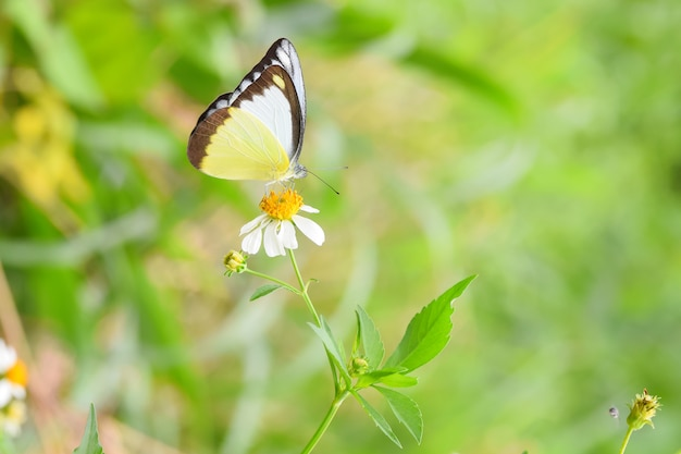 Mariposa colorida en flores blancas