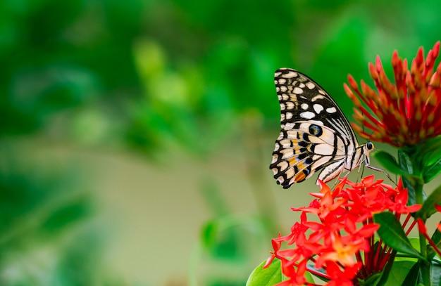 La mariposa colorida que chupa el néctar de la espiga florece con el fondo verde fresco.
