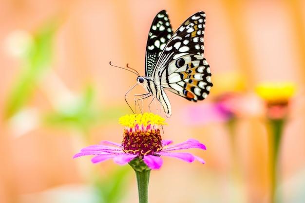 Mariposa en flor y fondo borroso