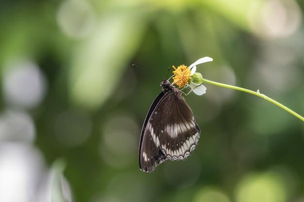 Mariposa y flor en el jardín.