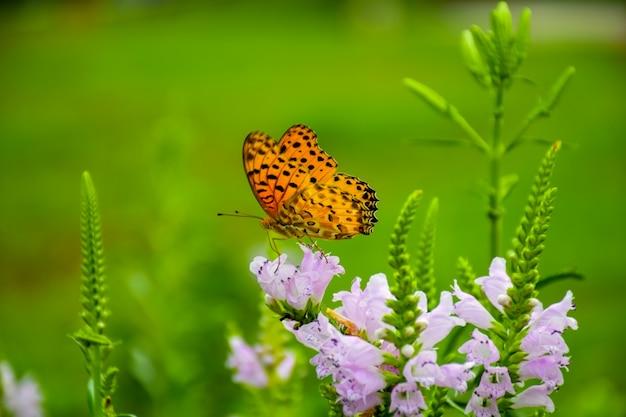 Mariposa en una flor lila