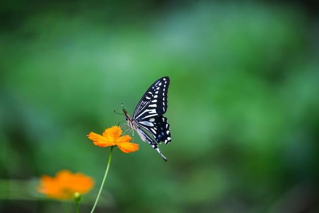 Mariposa en una flor naraja
