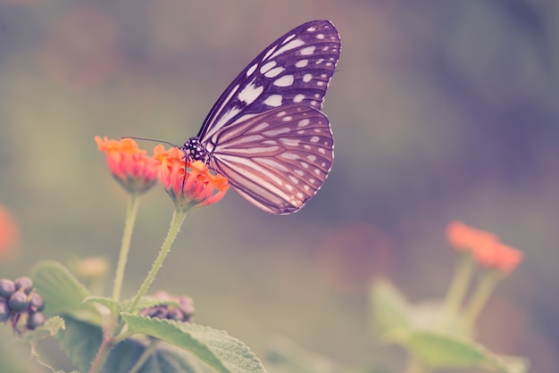 Mariposa en una flor