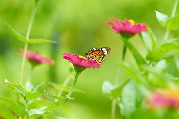 Mariposa en flores de pétalos de rosa con polen en tallo sobre fondo borroso