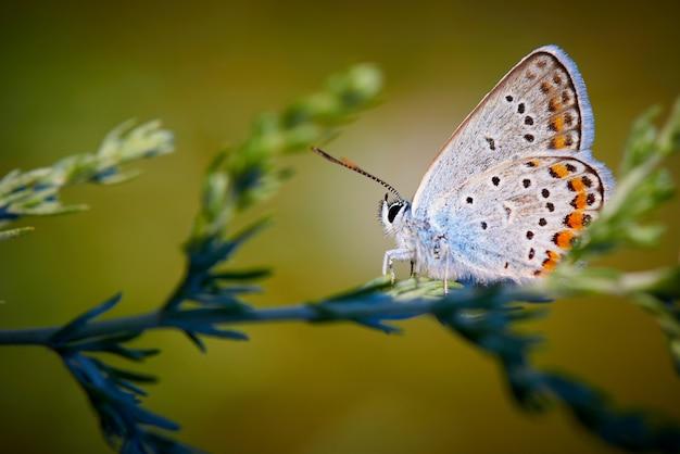 Mariposa en la hierba en la luz del sol con espacio de copia.