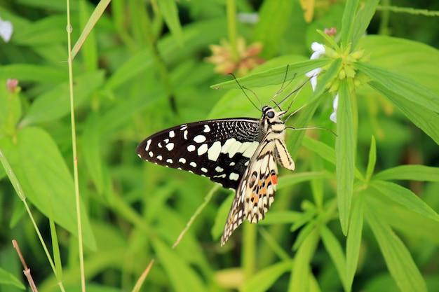 Mariposa en hoja verde