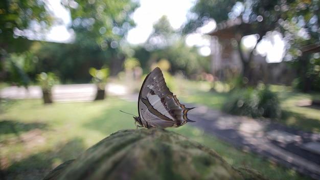 Mariposa en la mañana