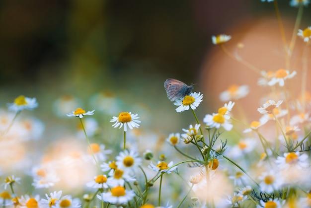 Una mariposa en una margarita en un jardín de hadas