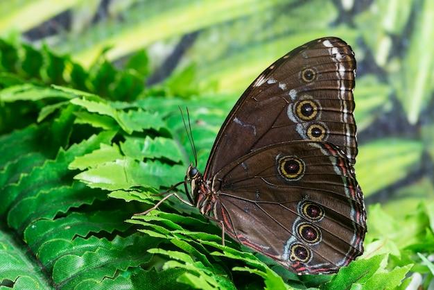 Mariposa marrón vista lateral en hábitat tropical