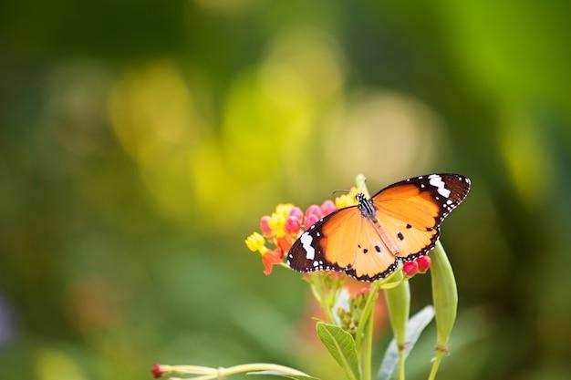 Mariposa monarca naranja en flor