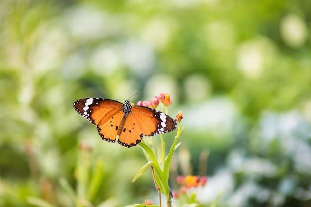 Mariposa monarca naranja con flor