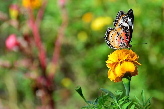 Mariposa naranja en flor y fondo verde