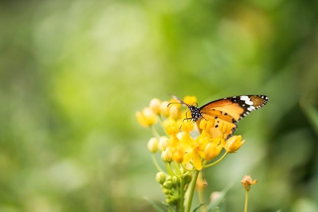 Mariposa naranja en flor en gargen