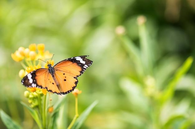 Mariposa naranja en flor por vista superior