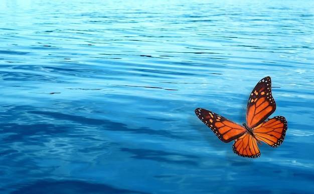 Mariposa naranja sobre un fondo de agua azul. plantilla para el diseño