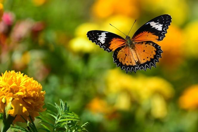 Mariposa naranja volando y fondo verde