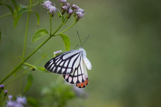 Mariposa en la planta de flores