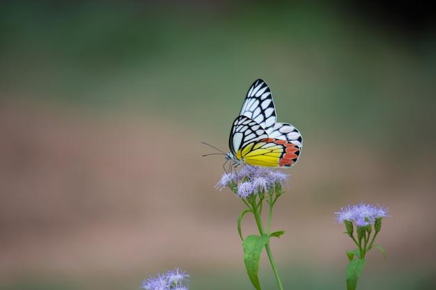 Mariposa en las plantas de flores