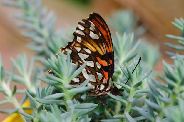 Mariposa planteada en planta suculenta.