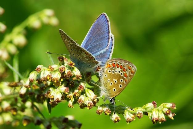 Mariposa en una rama