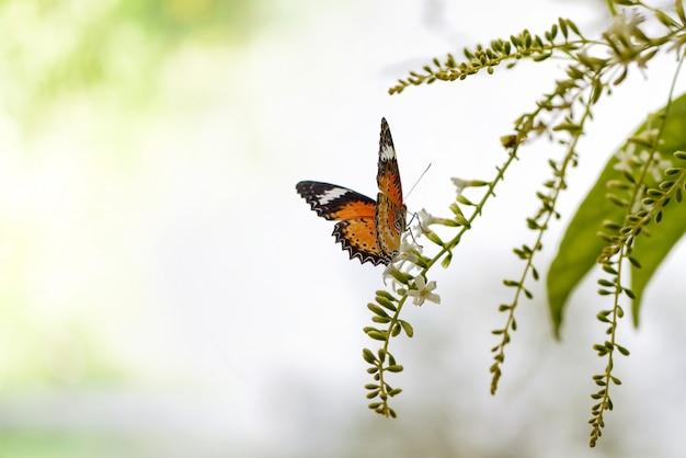 Mariposa en un ramo de flores verdes y espacio de copia