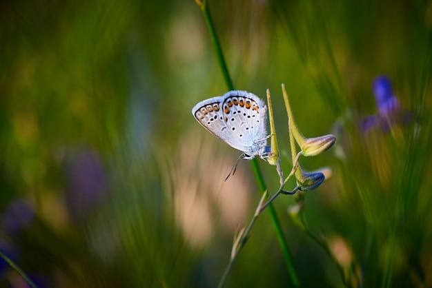 Mariposa sobre una flor en la hierba verde con espacio de copia.