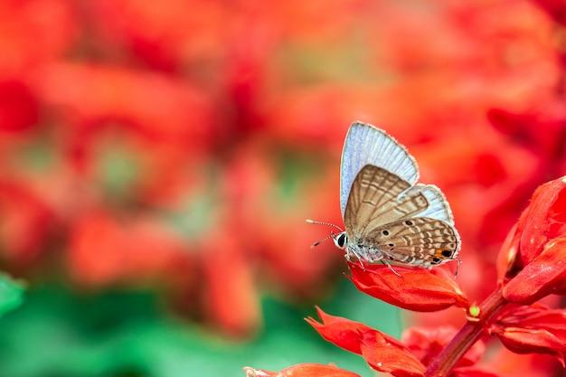 Mariposa sobre una flor roja