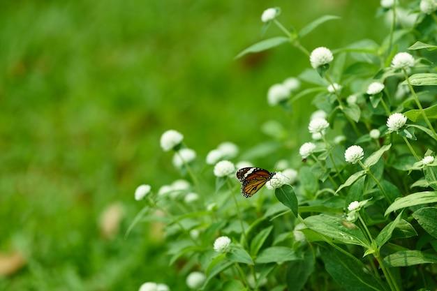 Mariposa sobre flores blancas con tema verde
