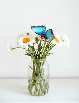 Mariposa tropical morpho se sienta sobre una flor blanca en un ramo de grandes margaritas y gerberas