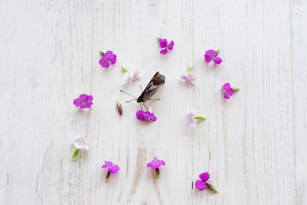 Mariposa vanessa atalanta sentada sobre fondo blanco de madera y flores de hierba de sauce