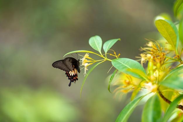 Las mariposas bajan a comer minerales por la mañana.
