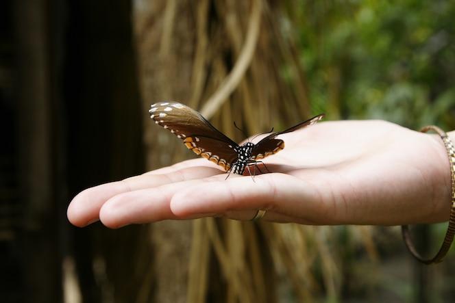 Mariposas de colores tropicales