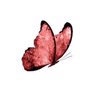 Mariposas rojas aisladas sobre fondo blanco. polillas tropicales. insectos para el diseño. pinturas de acuarela