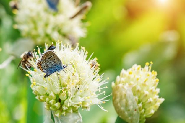 Las mariposas se sientan en las flores en un fondo natural verde