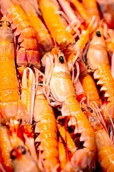 Marisco fresco del mar mediterráneo en el mercado