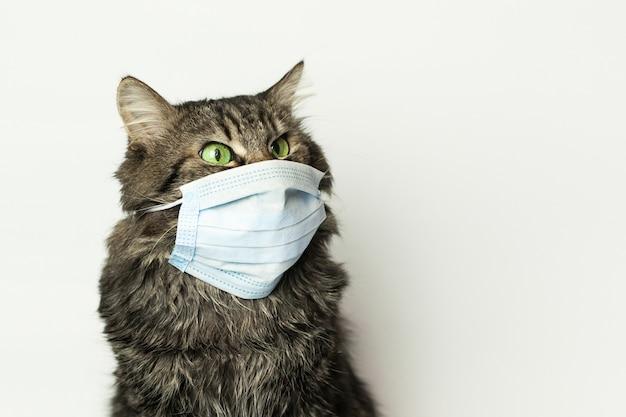Máscara médica para gato protegido contra virus en casa