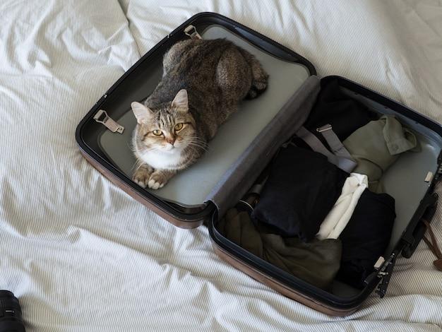 Mascota gato listo para viajar dormir en maleta con equipaje en cama