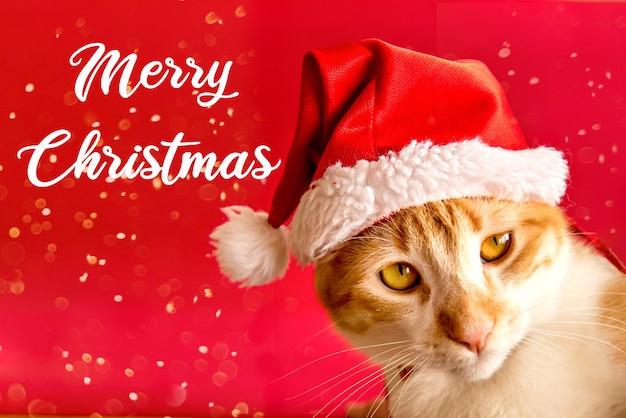 Mascota navideña. gato amarillo con gorro de navidad sobre fondo rojo.