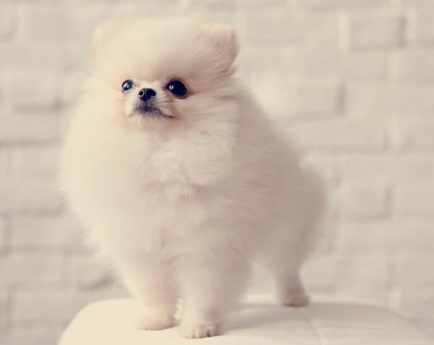 Mascota, perro, raza, animal, retrato, mascota, mamífero