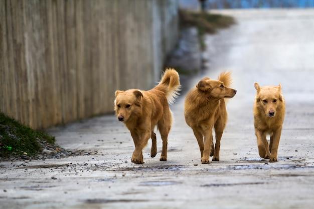 Mascota de tres perros amarillos con colas hinchadas al aire libre