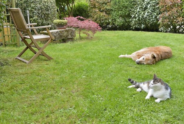 Mascotas acostadas en el jardín