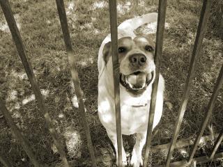 Mascotas mí ... no voy a morder ... honesto!