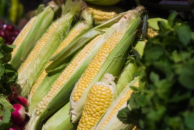Mazorcas de maíz verde en la fila