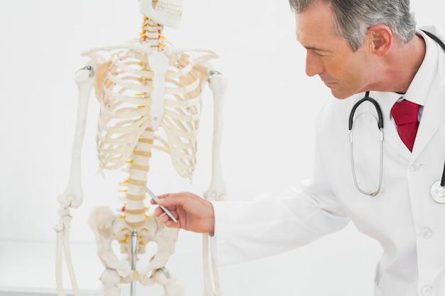 Médico explicando la columna vertebral en la oficina