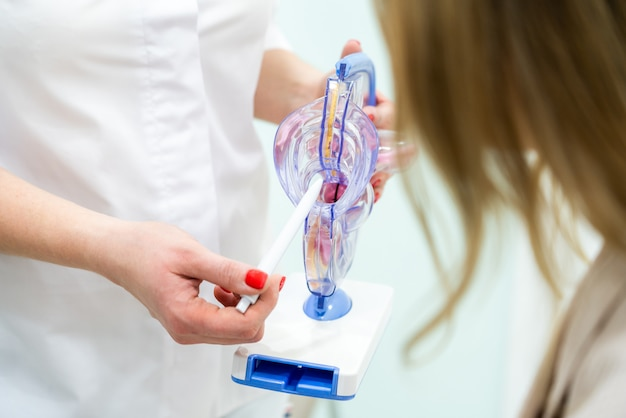Médico ginecólogo consulta paciente mostrando modelo de anatomía del útero